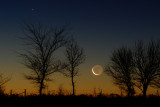 Moon & Tree Line