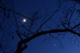 Jupiter - Moon - Venus Conjunction