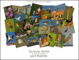 Últimas fotos - Last photos