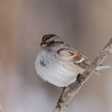 Oiseaux Janvier-Février 2011