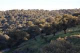 Dehesa -landskape (cork oak and home oak)