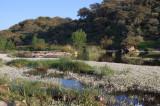 Rio Almonte with Ranunculus aquatilis ?