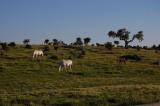 Heste i Extremadura, Spain