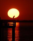 March 8, 2011 Pine Island, Florida
