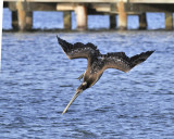 March 3, 2012, Pine Island, Florida