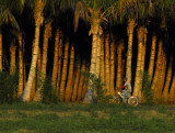 March 13, 2012, Pine Island, Florida