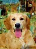 Junk Yard Dog by Deborah - March, 2012
