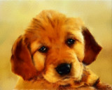 Sad Little Dog  --  fmr
