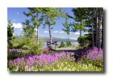 Yukon Days