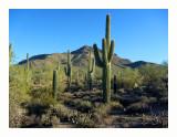 Arizona Hikes and Drives - Chapter 3