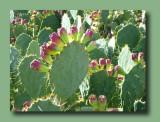 Boyce Thompson Arboretum - Chapter 6