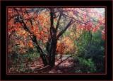Boyce Thompson Arboretum - Chapter 7