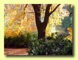 Boyce Thompson Arboretum - Chapter 8
