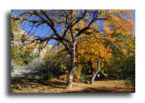 Boyce Thompson Arboretum - Chapter 9