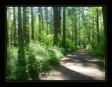 Mt. Douglas Park: Chapter 1