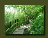 Swan Lake Nature Sanctuary