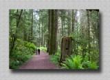 Iron Mine Bay Trail