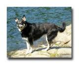 Sasha at Thetis Lake.jpg