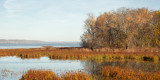 Backwater Reeds