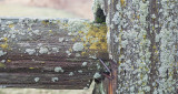 Split Rail with Lichen