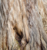Nude Tree Trunk