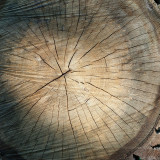 Sawn Oak Log