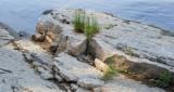 Riverbank Rock