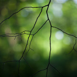 Branch in the Woods