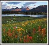 Molas Lake Paintbrush