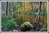 Mirrored Forest