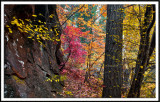 West Fork Canyon in Autumn IV