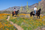 Horseback Riders at Catalina State Park