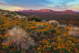 Mexican Poppy Field Atop Peridot Mesa