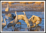 Playful Sandhills