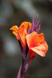 FleurFlower