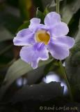 OrchidéeOrchid