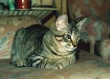 1988 summer Chuck 2 ps 700h.jpg