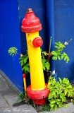 yellow and red fire hydrant  Reykjavik