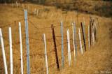 fence posts, Upolu Point, Hawaii