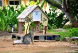 Waikola Ferral Cats, Waikola, Hawaii