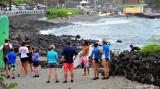 surf lesson by Kahalu'u's Ku'emanu Heiau, Keauhou, Hawaii