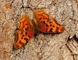 Butterfly_5890.jpg