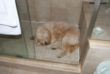 Sleeping in the shower