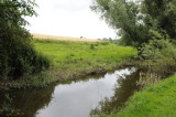 Stream near Kells Priory, County Kilkenny (3198)