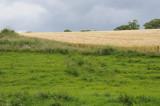 Field near Kells Priory, County Kilkenny (3197)