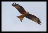 3658 flying red kite