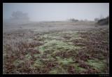2513 misty morning Kootwijkerzand