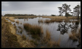 9735 Beerzerveld panorama