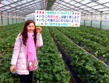 Strawberry Orchard in Kanagawa