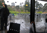 Rainy day from de Young Museum cafe - mImg_1917